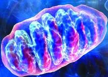 image d'une mitochondrie